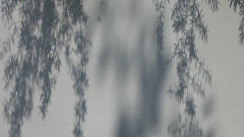 vídeos y material grabado en eventos de stock de hoja de sombra de árboles abstractos en movimiento 4 k - sombra
