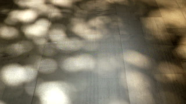 abstract tree leaf shadow in motion on wood floor