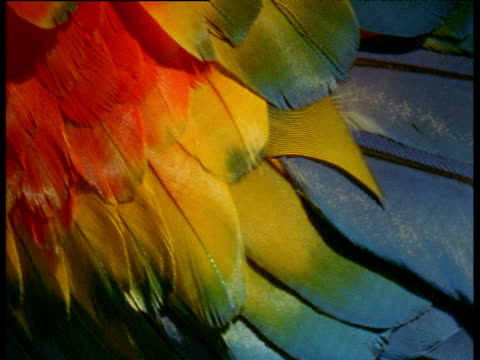 vídeos de stock e filmes b-roll de abstract, very colourful plumage of scarlet macaw, brazil - asa de animal