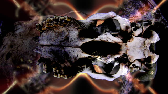 abstract visualization of a rotating animal skull. - animal skull stock videos and b-roll footage