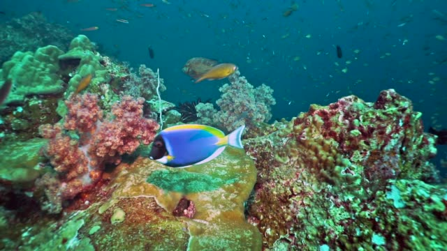 abundant schooling fish on coral reef, hin muang, thailand - scuba diver point of view stock videos & royalty-free footage