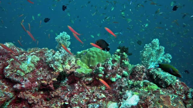abundant shoals of fish on coral reef, hin muang, thailand - scuba diver point of view stock videos & royalty-free footage
