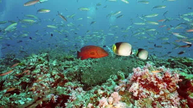 reichlich unterwasser-korallenriff in zusammenarbeit mit schulen tropischer fische - large group of animals stock-videos und b-roll-filmmaterial