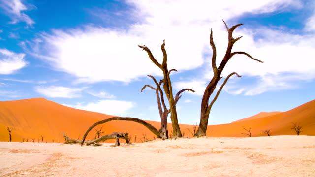 DS WS Acacia In The Dead Vlei