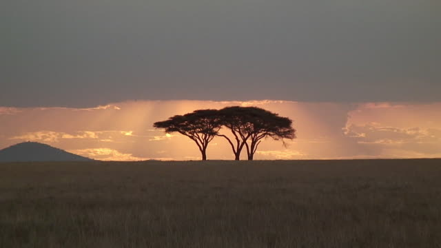 LS WS ZO Acacia tree against sunset sky, Serengeti, Tanzania