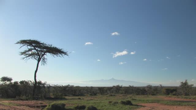 WS, Acacia tree growing in savanna, Mount Kenya in distance, Laikipia, Kenya