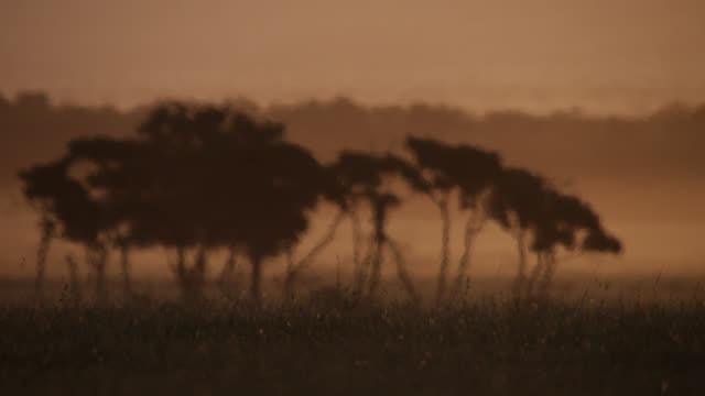 acacia trees on savannah in heat haze at sunset, kenya - heat stock videos & royalty-free footage