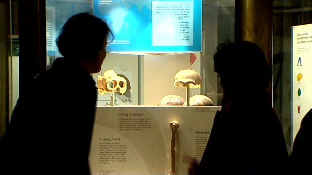 stockvideo's en b-roll-footage met acceleration in human evolution according to us researchers natural history museum visitors and museum exhibits in neanderthal section - prehistorische mens