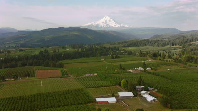 aerial across an agricultural land with mt. hood seen in the distance - mt hood stock videos & royalty-free footage