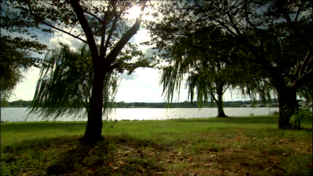 across grassy east bank of potomac river, sun shining brightly behind willow trees in fg , branches moving softly in wind, calm waters bg. serene,... - potomac river stock-videos und b-roll-filmmaterial