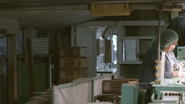 vidéos et rushes de pan across old olive processing plant as workers in protective clothing sort freshly picked olives rolling down conveyor belt  / ontario, california, usa - charlotte médicale ou sanitaire