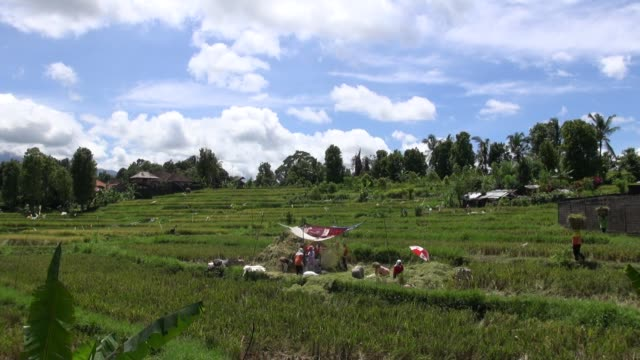ws across paddy fields along the road from seririt to sanda in west bali - asian style conical hat stock videos & royalty-free footage