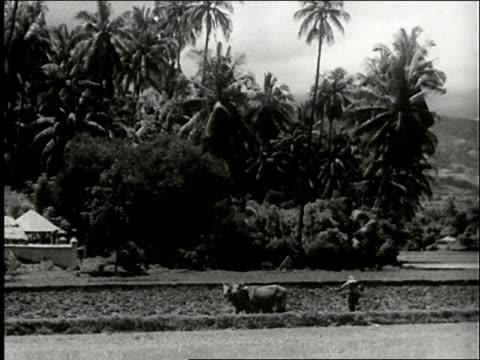 pan across picturesque tropical jungle landscape with farmer plowing rice paddy with team of oxen and palm trees and mountains / man wearing straw... - ox cart stock videos & royalty-free footage