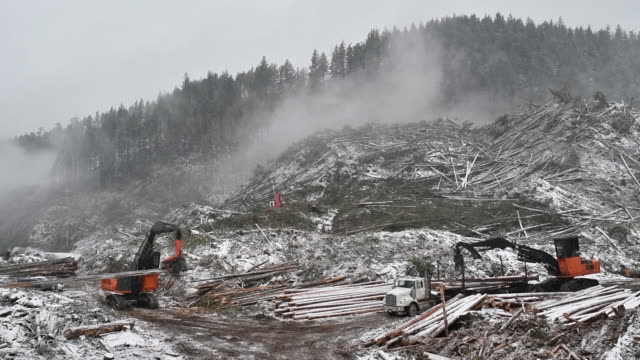 active forestry operation with western canada timber products in mountains above harrison mills, british columbia, canada, on tuesday, feb 4, 2020. - forestry industry stock videos & royalty-free footage