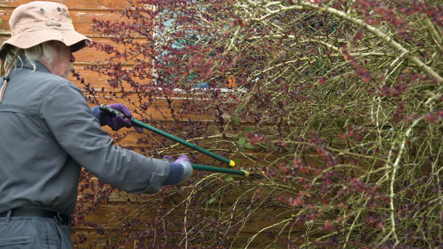 active retired man pruning a bush in a garden - gardening glove stock videos & royalty-free footage
