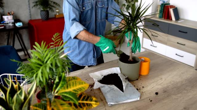 aktiver senior mann kümmert sich um seine hauspflanzen - gartenhandschuh stock-videos und b-roll-filmmaterial