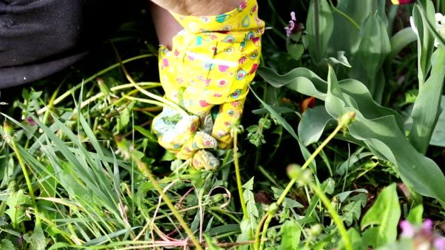 Actieve Senior vrouw tuinieren