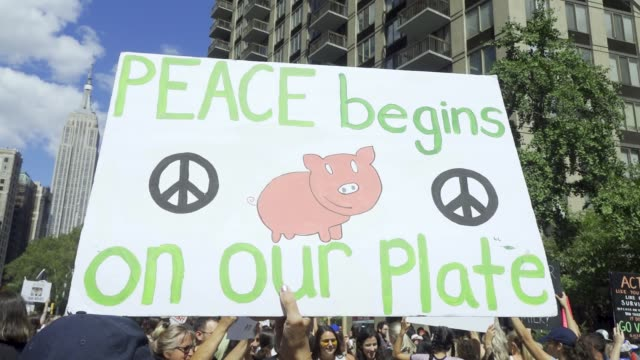 activist march via downtown manhattan's east village chanting pro-vegan slogan and distributing anti-cruelty literature and vegan educational related... - organised group stock videos & royalty-free footage