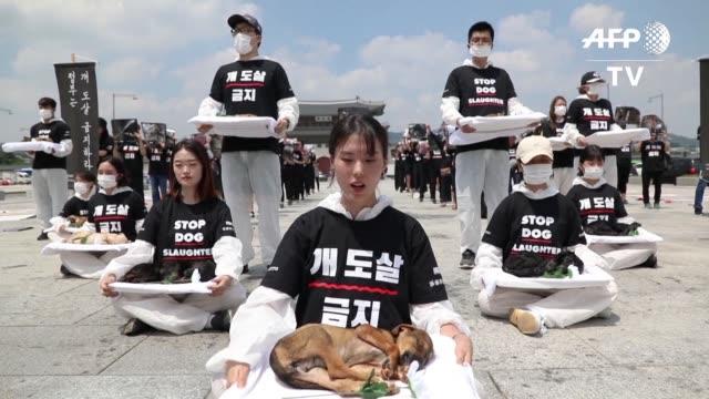 vídeos de stock e filmes b-roll de activistas del grupo animal liberation wave en defensa de los derechos de los animales realizaron una protesta con cachorros muertos extraidos de una... - exigir