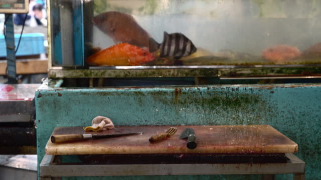 activity at fish market in the morning - fish market stock videos & royalty-free footage
