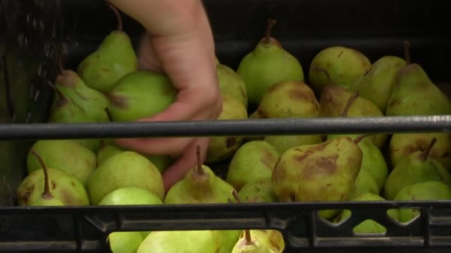acton school tackles problem of london food waste england london borough market ext various of lydia ganaa loading food into car - itv london lunchtime news stock-videos und b-roll-filmmaterial