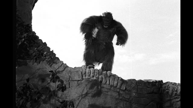 Actor in gorilla suit jumps off cliff Actor in gorilla suit jumps off cliff on January 01 1950