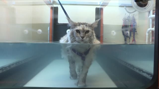 acupuncture for dogs hydrotherapy for cats as pet ownership in the us has increased to nearly 85 million households so too has the variety of... - acupuncture stock videos & royalty-free footage