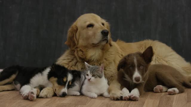 Hinzufügen eines neuen Mitglieds der Familie