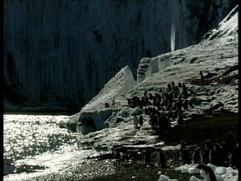 wa adelie penguin colony standing near edge of iceberg, antarctica - antarctica night stock videos & royalty-free footage