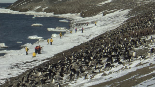 vídeos de stock, filmes e b-roll de ws adelie penguin (pygoscelis adeliae) colony with tourists on beach / devil island, antarctic peninsula, antarctica - organismo aquático