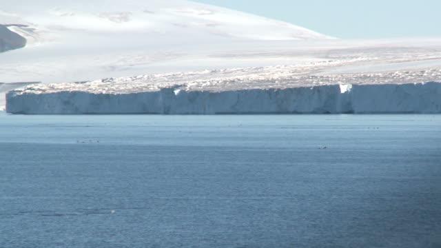 Adelie penguin (Pygoscelis Adeliae) porpoising at sea. Brown Bluff, Antarctic Peninsula