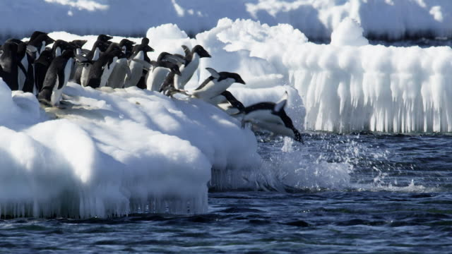 adelie penguins diving into the antarctic sea - south pole stock videos & royalty-free footage