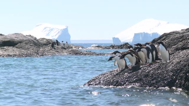 Adelie penguins (Pygoscelis Adeliae) enter sea. Antarctic Peninsula