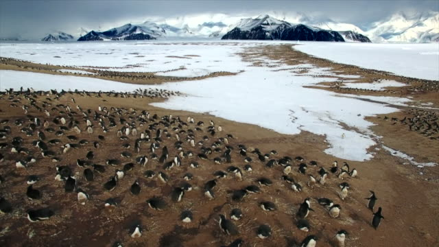 vídeos de stock e filmes b-roll de adelie penguins in antarctica - colony