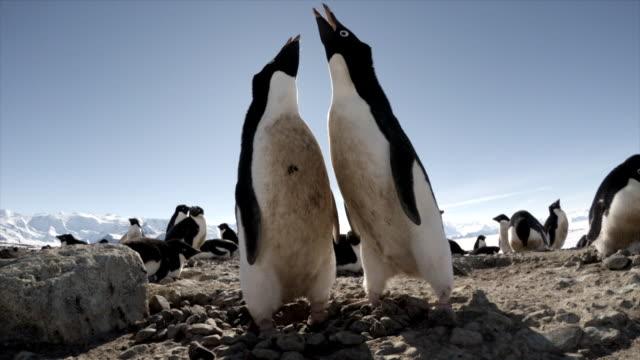 vidéos et rushes de adelie penguins in antarctica - climat
