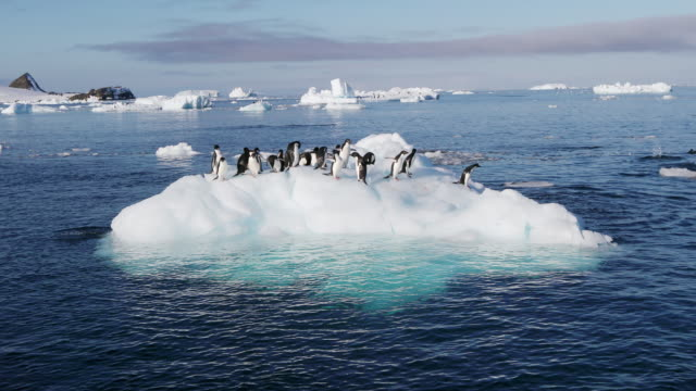 adelie penguins on ice floe - ice stock videos & royalty-free footage