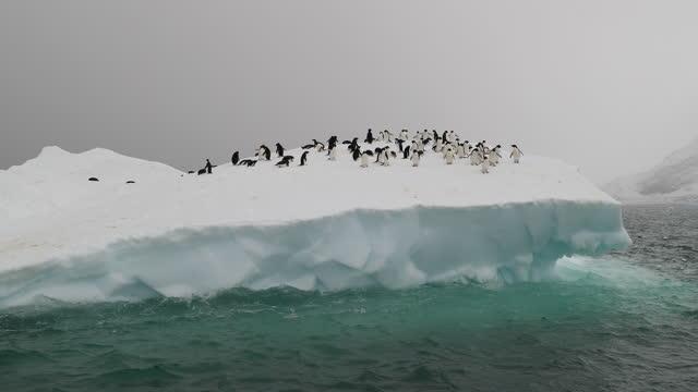 adelie penguins on iceberg, brown bluff, antarctica - ice stock videos & royalty-free footage