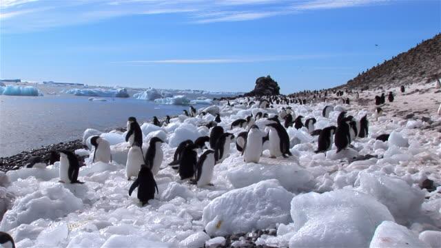 ms, adelie penguins, paulet island, antarctic peninsula, antarctica - antarctic ocean stock videos & royalty-free footage