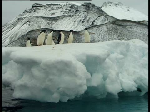 adelie penguins (pygoscelis adelidae) standing on ice raft, paulet island, antarctic peninsula, antarctica - きまり悪さ点の映像素材/bロール
