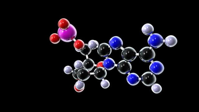 Adenine DNA Nucleotide