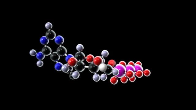 adenosine triphosphate - mitochondrion stock videos & royalty-free footage