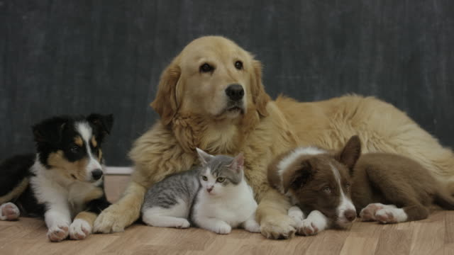 adopt a new friend - dog and cat stock videos and b-roll footage
