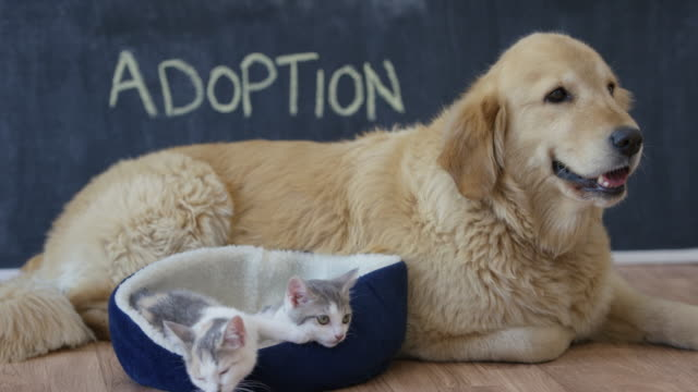 adopt a pet - rescue stock videos & royalty-free footage