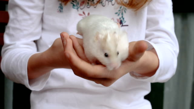 adorable and restless hamster in the hands of a red-haired girl - 20 seconds or greater stock videos & royalty-free footage