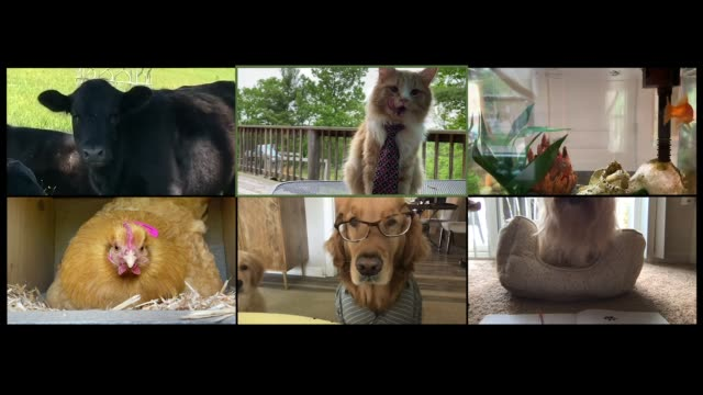 adorable animals have a meeting on video conference call (audio) - quarantena video stock e b–roll