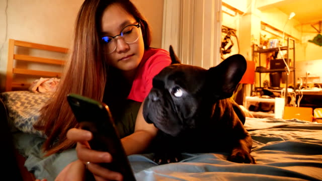 Adorable Black french bulldog enjoys using smart phone with Asian woman on the bed. Concept: Pet, funny,life,communication.