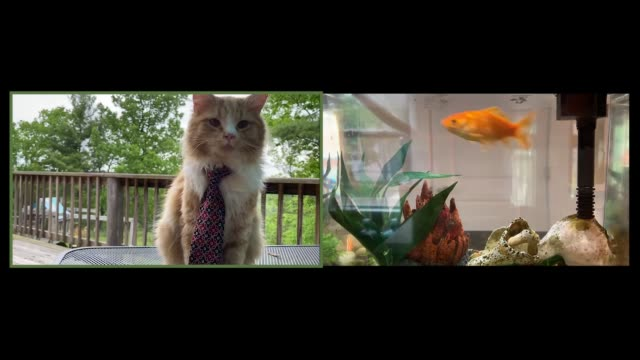 adorable cat has a video call with tasty goldfish friend - formal businesswear stock videos & royalty-free footage