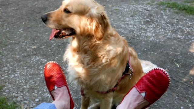 Süße weibliche Golden Retriever Hund neben der Eigentümer der Füße
