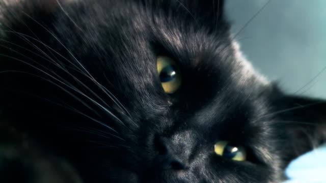 hd :かわいらしいキトン目覚め - 黒猫点の映像素材/bロール