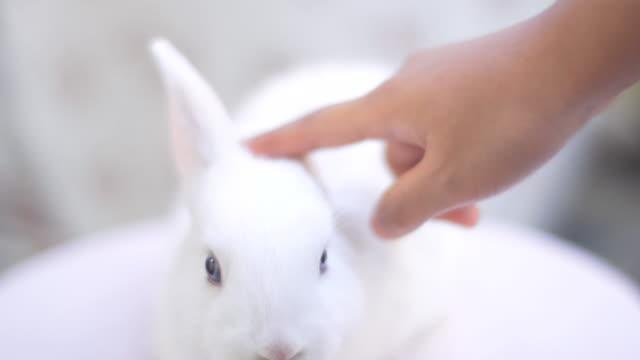 vídeos de stock e filmes b-roll de adorable white bunny - suavidade